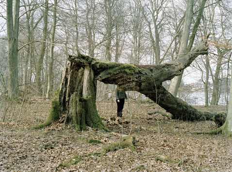http://idaarentoft.com/files/gimgs/th-16_03 Broken Tree_v2.jpg